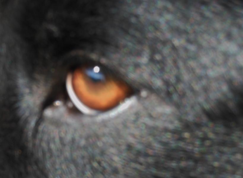 Jake's warm golden brown eye :) Gold
