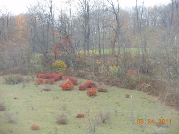 October and November 2012 052