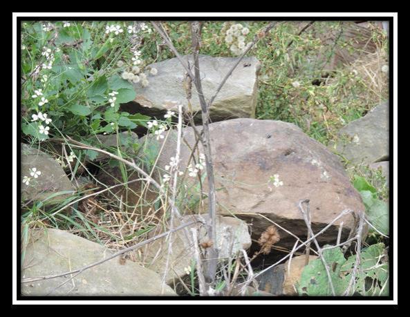 010614_1924_SubstanceMa2.jpg